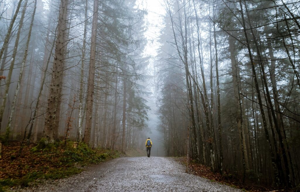 storytelling - floresta